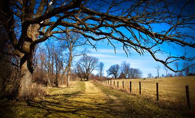 Oak Tree  04 02 11  022
