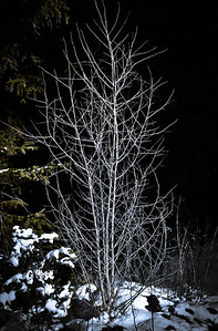 Aspen Tree Winter 11-26-10 003 - Edit