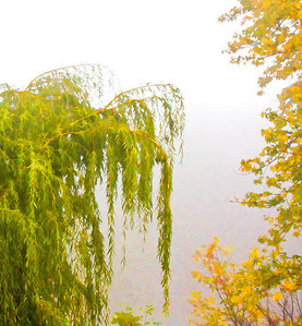 Fog  10 18 08  020 - Edit-3