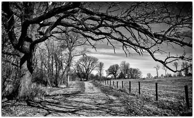 Oak Tree  04 02 11  017