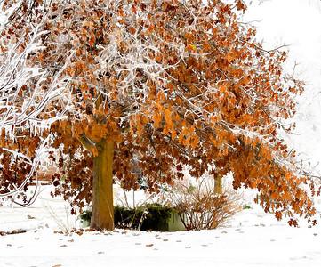 Ice Storm 12 11 07 59 - Edit