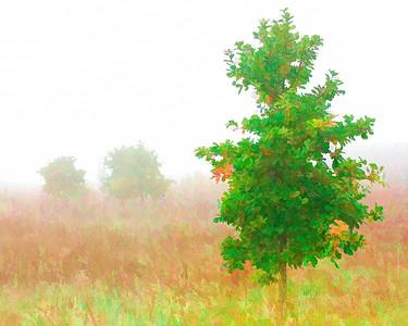 Fog  10 18 08  047 - Edit