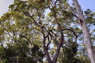 Pine Ridge Conservation Park; Runaway Bay, Gold Coast, Queensland, Australia; 25 October 2012. Photos by Des Thureson
