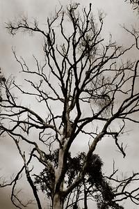 Alternate Processing - Pine Ridge Conservation Park; Runaway Bay, Gold Coast, Queensland, Australia; 25 October 2012. Photos by Des Thureson