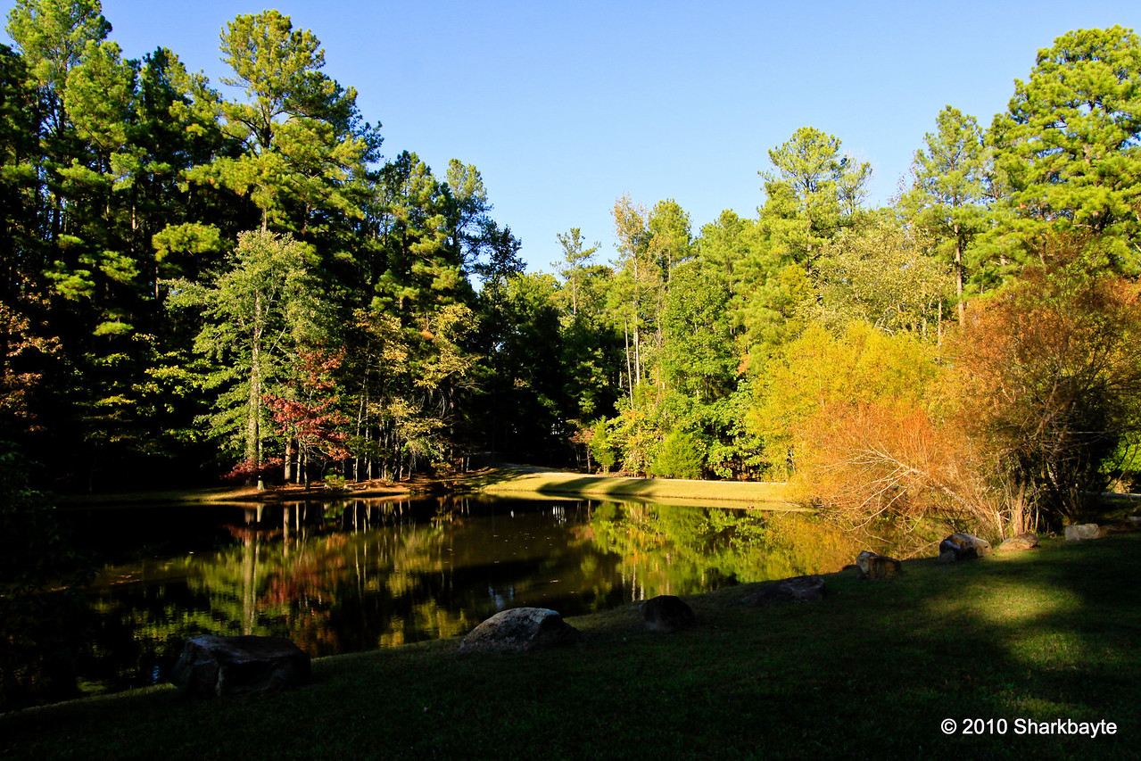 Still waiting for the fall colors...#365Project Day 298 (2010.10.25) @sharkbayte