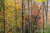 Quebec forest in autumn