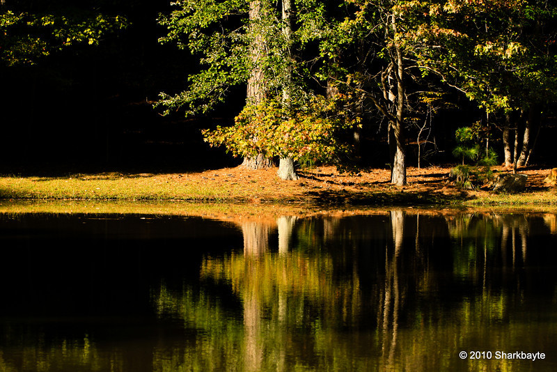The pond. I been waiting for months to get to this pond (actually there are two ponds).  Thanks to my new chair I was able to make it here! It was very windy and I waited for some calm water but that never happened. If my chair could go through the woods I could get here very quickly. Day 279 #365Project (2010.10.06) @sharkbayte