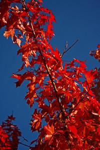 2007 Oct 23 018_edited-1