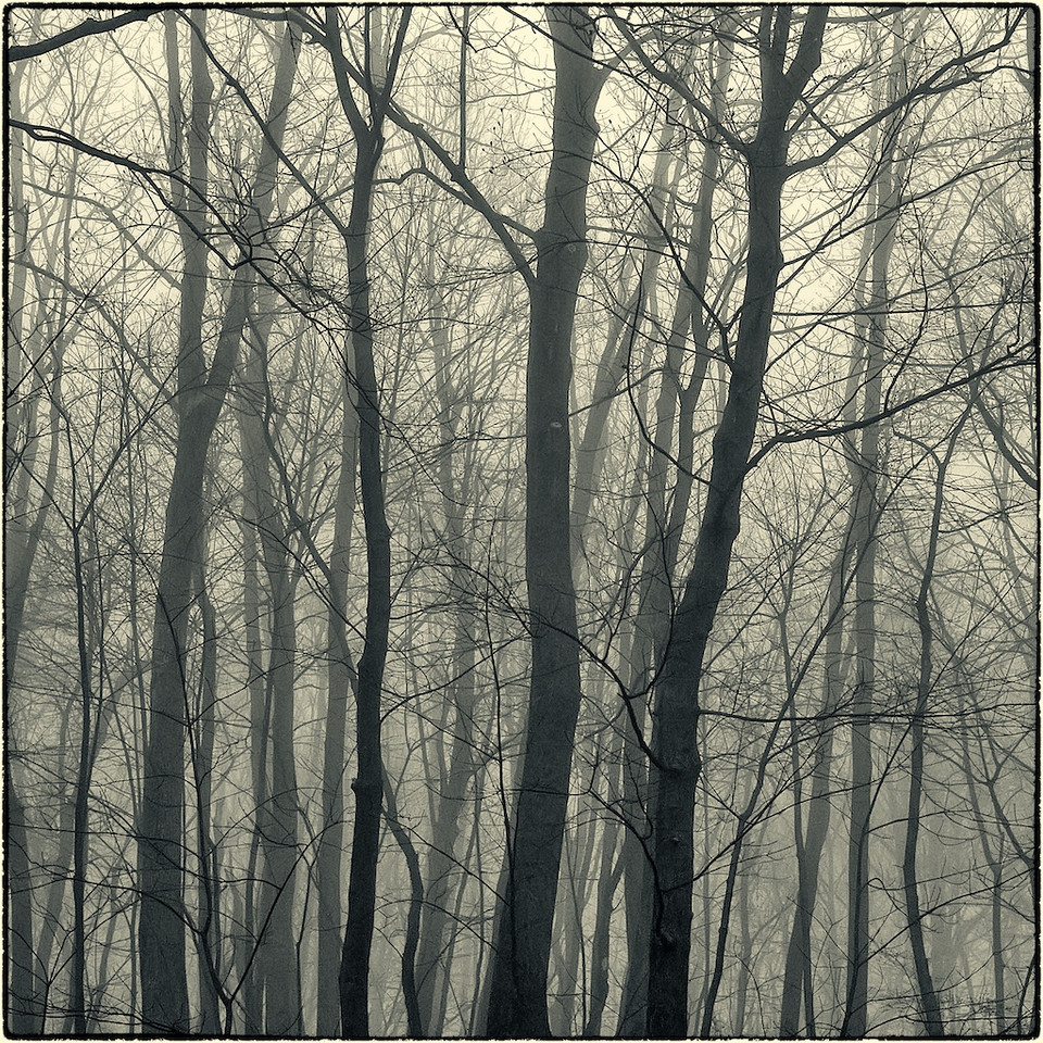 Trees in Fog : 2a