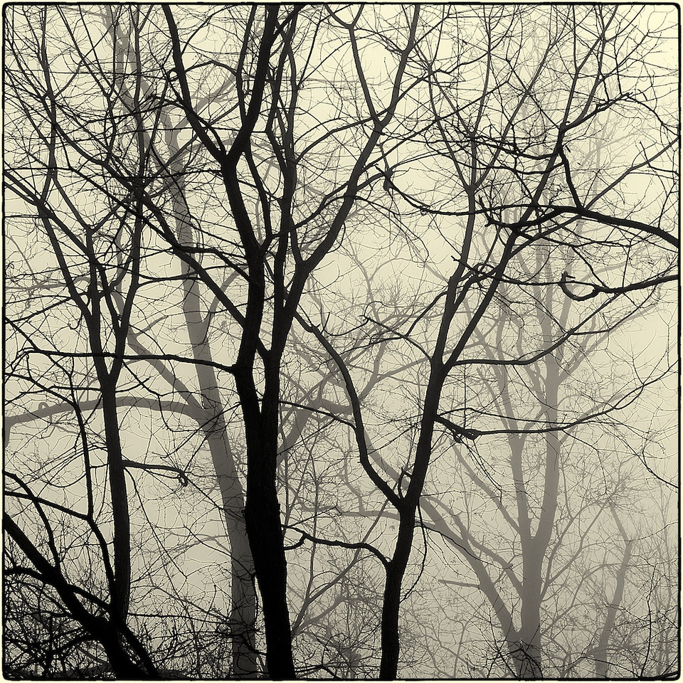 Trees in Fog : 9