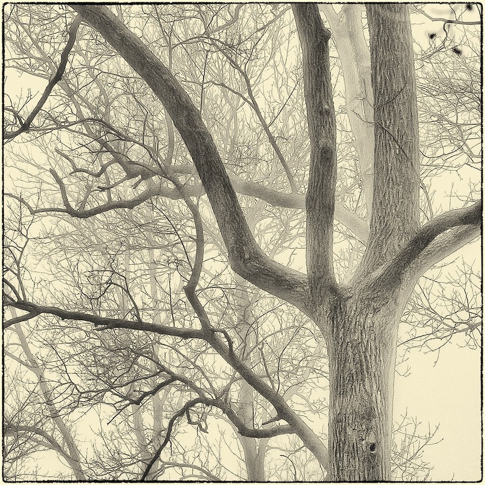Trees in Fog : 7