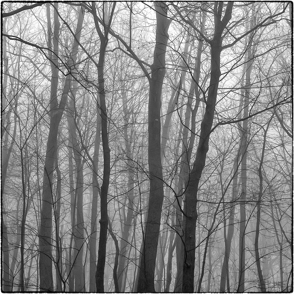 Trees in Fog : 2b
