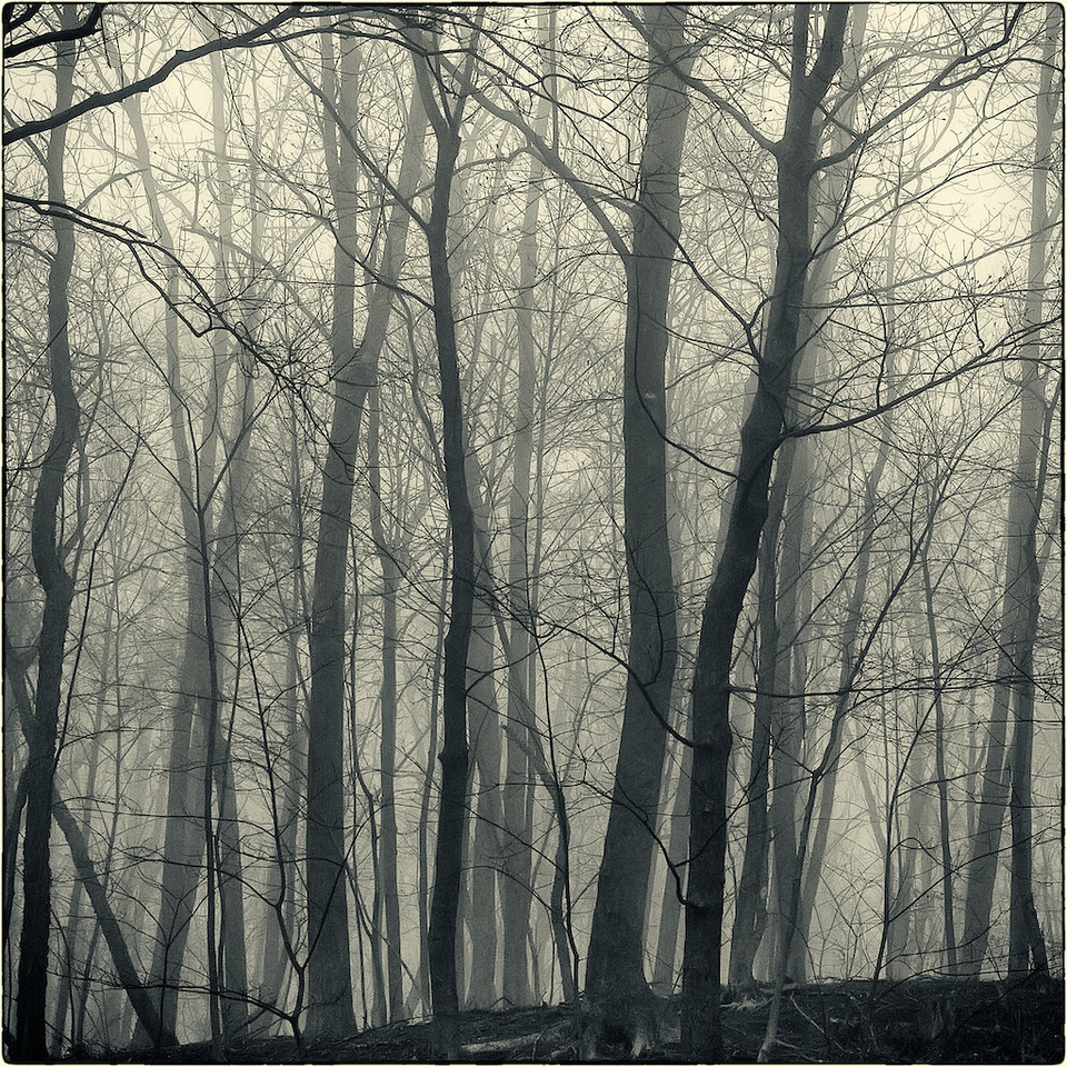 Trees in Fog : 1