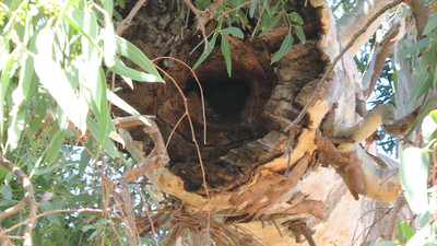 """Hollows for bird nest in """"River"""""""