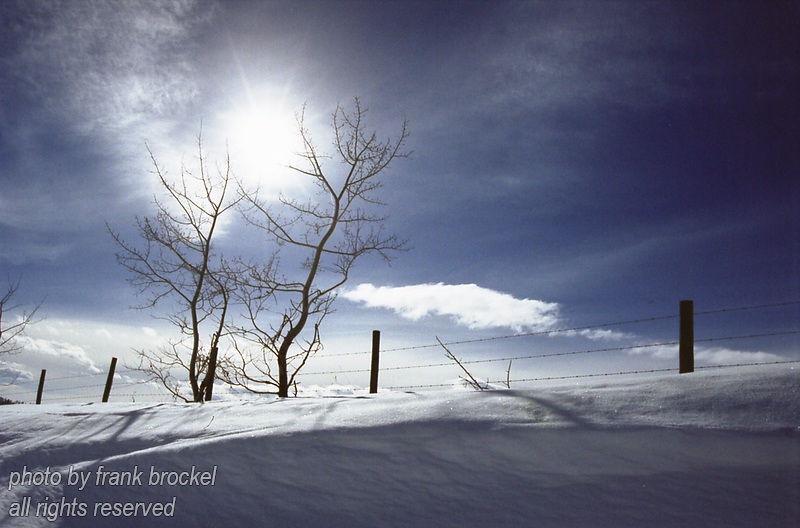 Trees along a fence line in winter