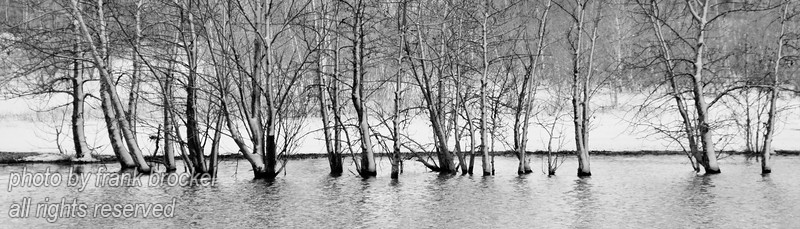 Trees in the water with snow stuck on them from an overnight snowstorm
