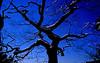 Morse-Mt-tree