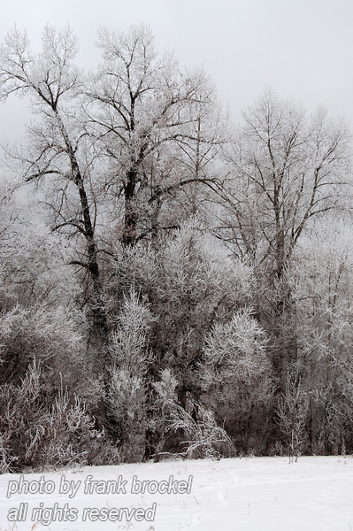 "Trees covered with hoar frost after 2 days of thick fog near the zoo at the Bow River in Calgary.  I liked the contrast between the white frosted branches and the dark tree trunks.  These photos would look great in 11""x17"" with a light/dark matte and metal frame."