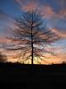 Pine Tree State Arboretum, Augusta, MaIne
