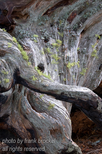 Tree trunk and roots