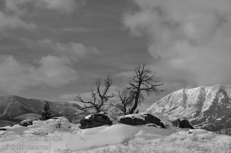 """A snowy landscape in the Crowsnest Pass, Alberta.  In the background on the right is Turtle Mountain, scene of a massive landslide in the early hours of April 29, 1903, that the Frank Slide—the deadliest rock slide in Canadian history—claimed the lives of 90 Albertans.  <br /> This photo would look good on a website - for info how to purchase this photo contact us here: <a href=""""http://canadaweb.net"""">http://canadaweb.net</a>."""
