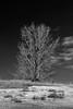 Portrait of a tree I