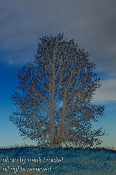 Prortait of a tree VI - surrealistic rendition