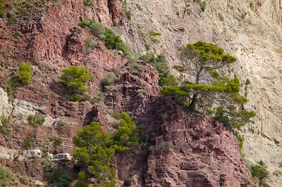 CAV45665 - Pinus pinaster cresciuti su una parete rocciosa