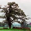 20080322-tree4 summer