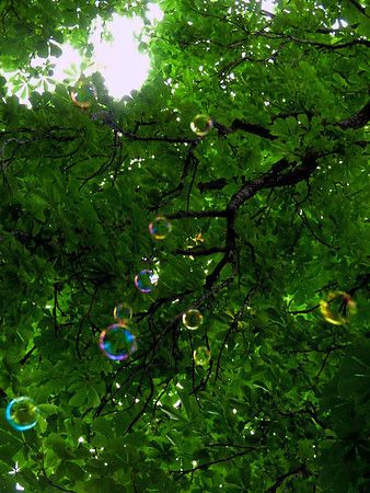 Tree with Bubbles
