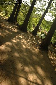Trees & Shadows
