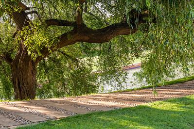 Cambridge Tree