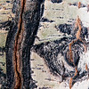 Birch Tree Bark Details