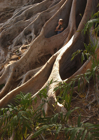 Lydia in giant Moreton Bay fig tree roots; Balboa Park, CA