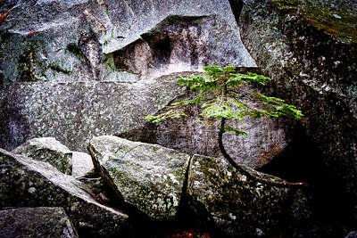 Fir & Rocks