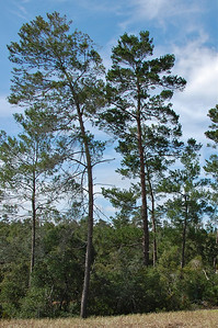Native Florida Trees. © Nora Kramer Photography.