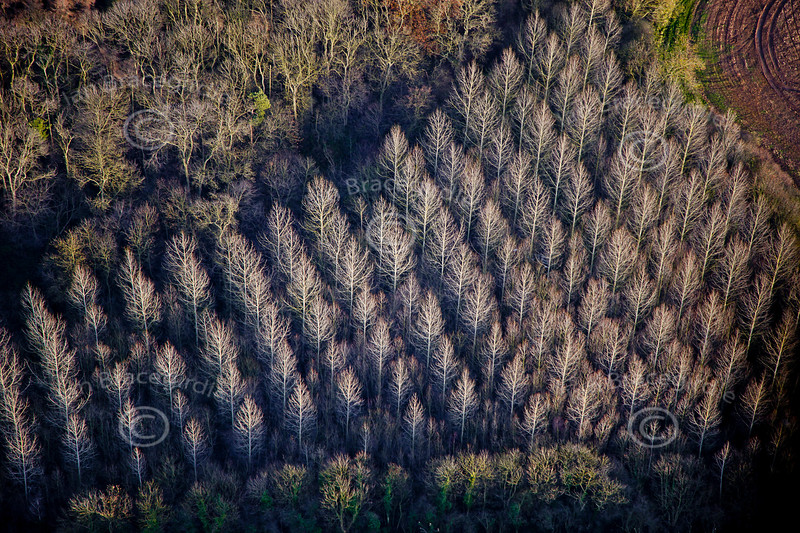 An abstract aerial photo of some silver trees.