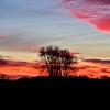 3-24-18 sun-nature14