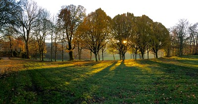 Bingley Park