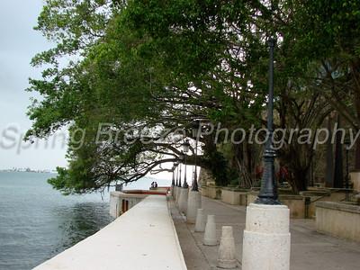 Banyan tree Old San Juan May 2012