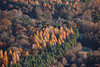 Aerial photo of trees.