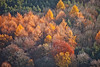 Aerial photo of colourful trees in Sherwood Forest.