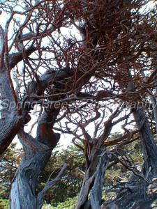 point lobos state reserve Monterey  april 2009