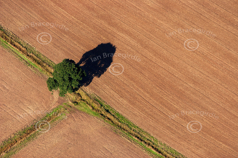 An aerial photo of a single tree and shadow.