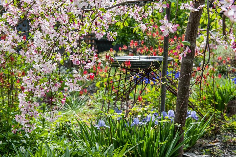 Rundle Wood Gardens, Calgary, Alberta - Springtime