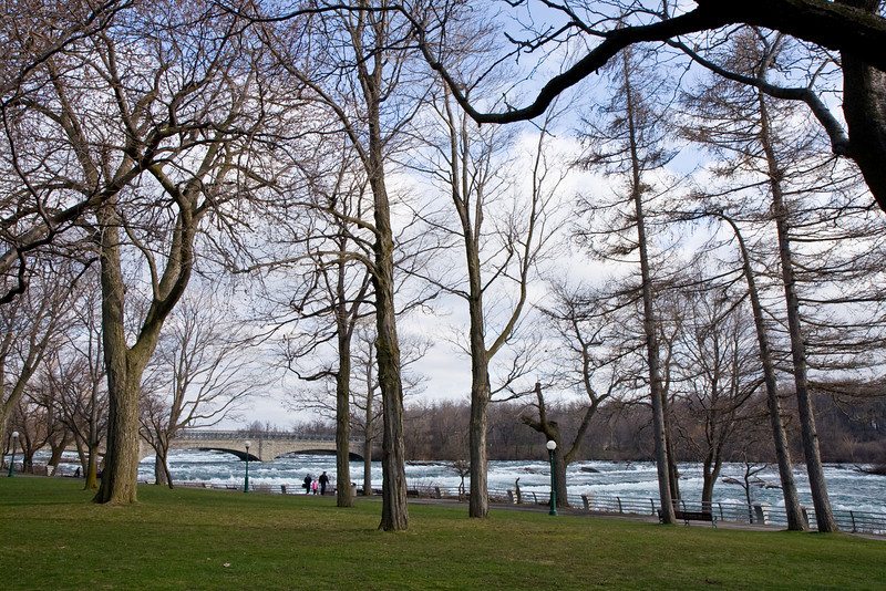 Trees at Niagara River