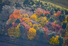 Aerial photo of colourful trees.