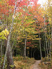 Porcupine Mts., Michigan