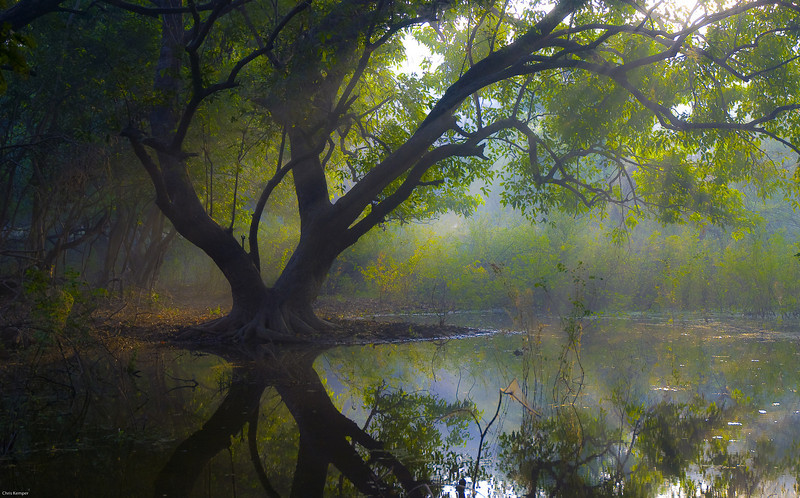 Bharatpur Tree, India