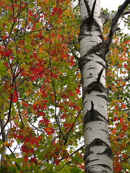 Fall in the PORCUPINE MTS. STATE PARK - Michigan